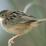 Miles de voluntarios salen al campo en primavera a contar aves en España