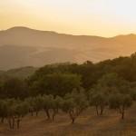 (Andalucía)-  La Junta pone en marcha una plataforma para favorecer el ecosistema emprendedor en municipios rurales andaluces