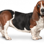 (RSC)- Rastreator.com lanza el portal Adopta un Perro