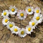 Hoy, en el Día Mundial del Corazón, la FEC recuerda la importancia de la prevención de la enfermedad cardiovascular