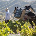 La FAO declara dos lugares españoles los primeros patrimonios agrícolas de Europa
