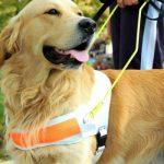 Navarra edita la primera guía sobre perros de asistencia de España