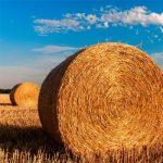La paja de trigo, futuro de las baterías sostenibles