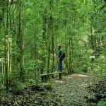 Beneficios de los bosques para los enfermos de fibromialgia