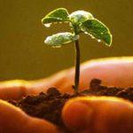 Agricultores de Castilla-La Mancha, Murcia y Andalucía oriental recibirán formación para una producción más sostenible