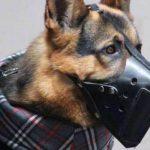 Los perros de protección, los nuevos aliados de las víctimas de violencia de género