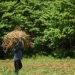 Telefónica y la FAO impulsarán iniciativas de digitalización para mejorar el sector agrícola y el acceso a la información de comunidades rurales