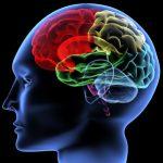 El importante papel de la Neuropsicología en la atención de la personas en situación de dependencia