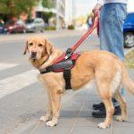 """(Madrid) – """"Ellos no llevan calzado""""es la nueva campaña para proteger a los perros guía de los residuos arrojados al suelo"""