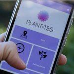Crean una aplicación móvil que alerta del riesgo de alergia en las calles de una ciudad