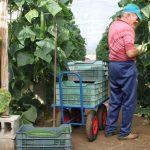 (Andalucía) – Una nueva herramienta predicirá las cosechas hortícolas