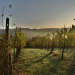 La Universidad Europea Miguel de Cervantes acoge una nueva edición de su Curso centrado en el mundo del vino y su relación con la cocina