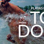 PACMA reclama el libre acceso de animales a las distintas playas españolas.
