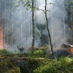 Fundación Aquae combate la pérdida de masa forestal causada por los incendios en España