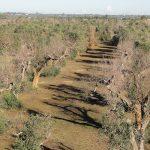 El CSIC y el sector del olivar aúnan fuerzas para luchar contra la bacteria 'Xylella fastidiosa'