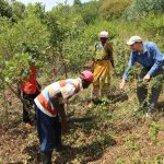 Tony Rinaudo, el australiano que ayudó a transformar el desierto africano en 200 millones de árboles