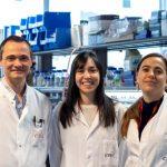 Adiponectina, la hormona que protege a las mujeres frente al cáncer de hígado