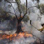 El movimiento ciudadano urge a elaborar el plan contra incendios
