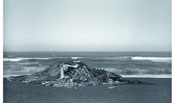 Fundación MAPFRE presenta la obra del fotógrafo británico Richard Learoyd en Barcelona