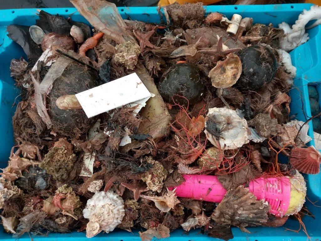 Un estudio afirma que la basura invade las redes de pesca en las áreas cercanas a las ciudades