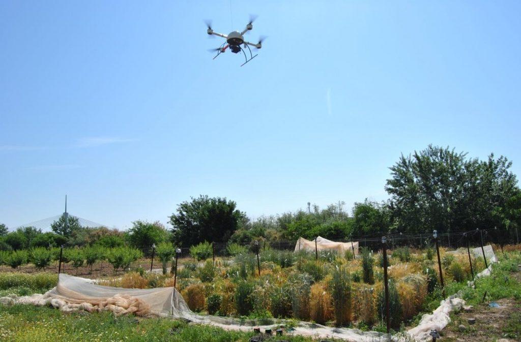 Un nuevo método basado en drones ayuda a escoger el cereal más apto para producir bioetanol