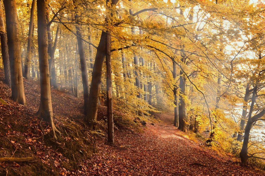 Los bosques retienen el carbono cada vez durante menos tiempo