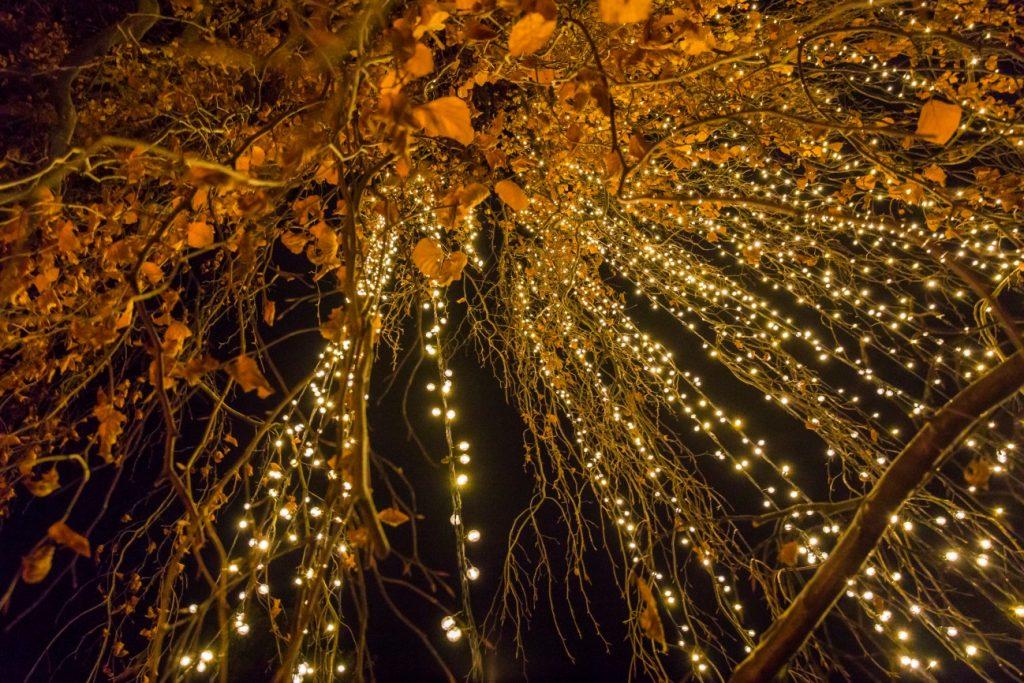 Las luces navideñas llegan al Real Jardín Botánico del CSIC