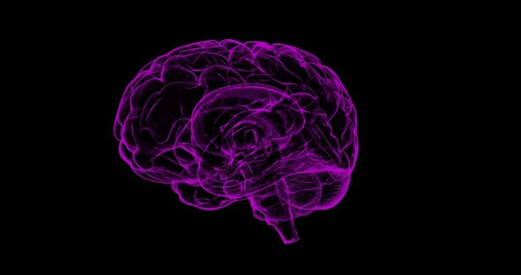El sistema inmune participa en las alteraciones cerebrales que provocan la adicción al alcohol