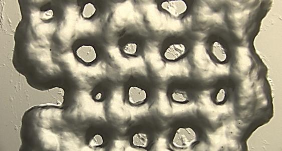 Nuevos hidrogeles permiten cultivar células T para ser usadas en inmunoterapia contra el cáncer