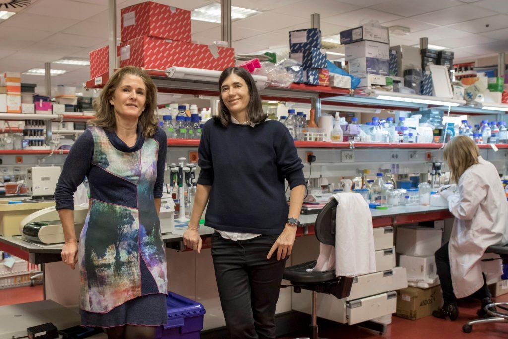 Científicas del CNIO y de la Universidad Autónoma de Barcelona crean una 'spin off' para desarrollar el primer tratamiento contra la fibrosis pulmonar basado en terapia génica